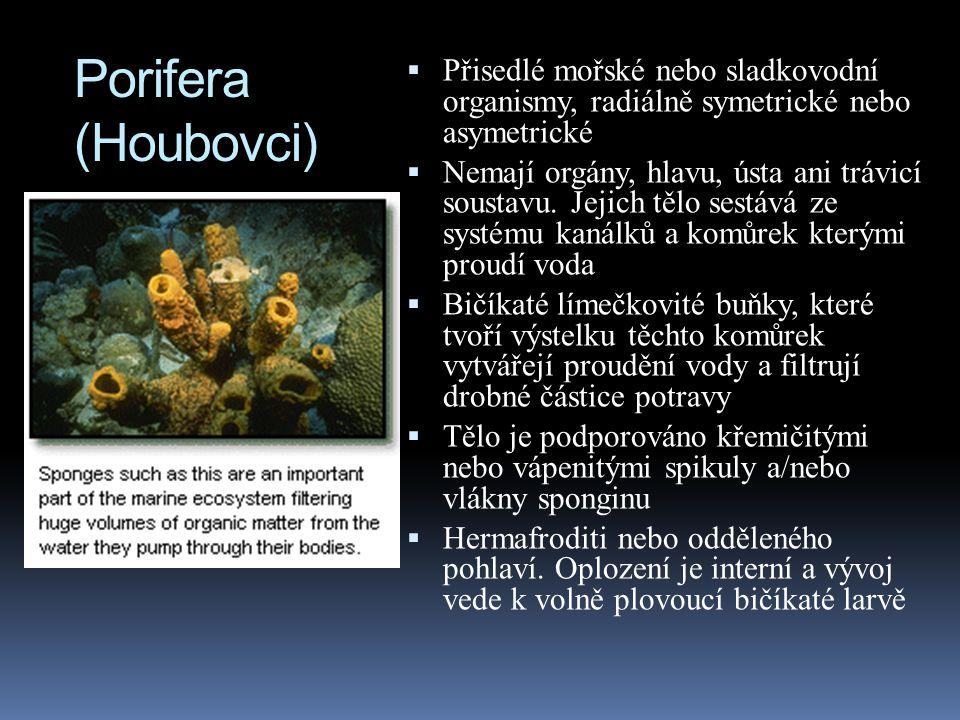 Porifera (Houbovci)  Přisedlé mořské nebo sladkovodní organismy, radiálně symetrické nebo asymetrické  Nemají orgány, hlavu, ústa ani trávicí soustavu.