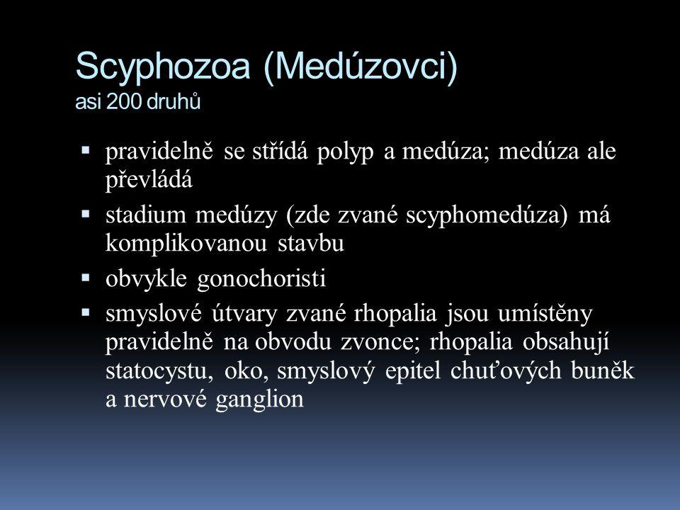 Scyphozoa (Medúzovci) asi 200 druhů  pravidelně se střídá polyp a medúza; medúza ale převládá  stadium medúzy (zde zvané scyphomedúza) má komplikovanou stavbu  obvykle gonochoristi  smyslové útvary zvané rhopalia jsou umístěny pravidelně na obvodu zvonce; rhopalia obsahují statocystu, oko, smyslový epitel chuťových buněk a nervové ganglion