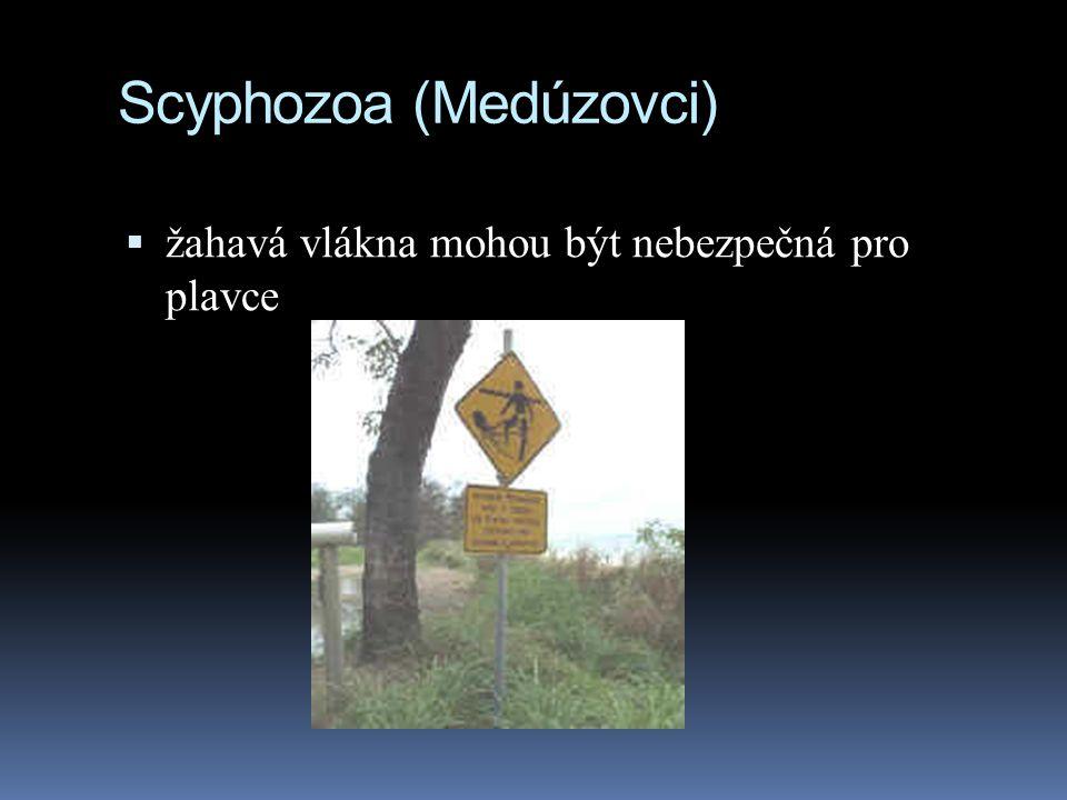 Scyphozoa (Medúzovci)  žahavá vlákna mohou být nebezpečná pro plavce