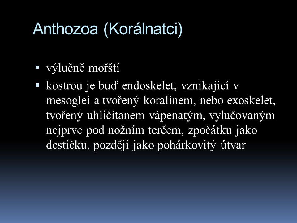 Anthozoa (Korálnatci)  výlučně mořští  kostrou je buď endoskelet, vznikající v mesoglei a tvořený koralinem, nebo exoskelet, tvořený uhličitanem vápenatým, vylučovaným nejprve pod nožním terčem, zpočátku jako destičku, později jako pohárkovitý útvar