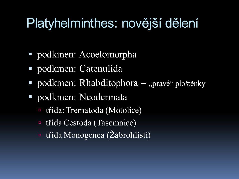 """Platyhelminthes: novější dělení  podkmen: Acoelomorpha  podkmen: Catenulida  podkmen: Rhabditophora – """"pravé ploštěnky  podkmen: Neodermata  třída: Trematoda (Motolice)  třída Cestoda (Tasemnice)  třída Monogenea (Žábrohlísti)"""
