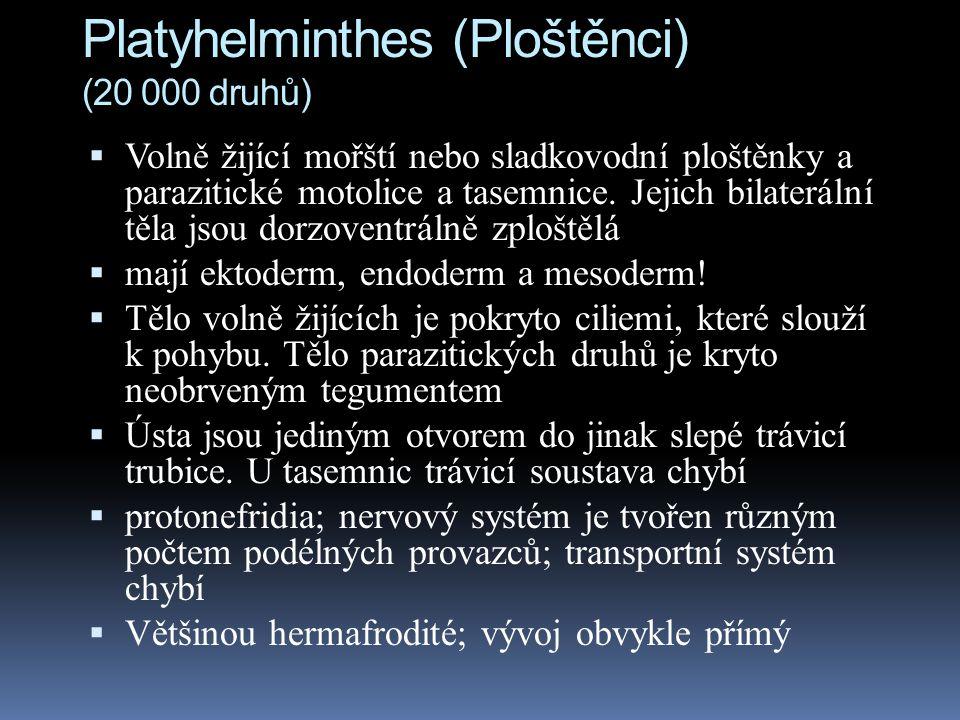 Platyhelminthes (Ploštěnci) (20 000 druhů)  Volně žijící mořští nebo sladkovodní ploštěnky a parazitické motolice a tasemnice.
