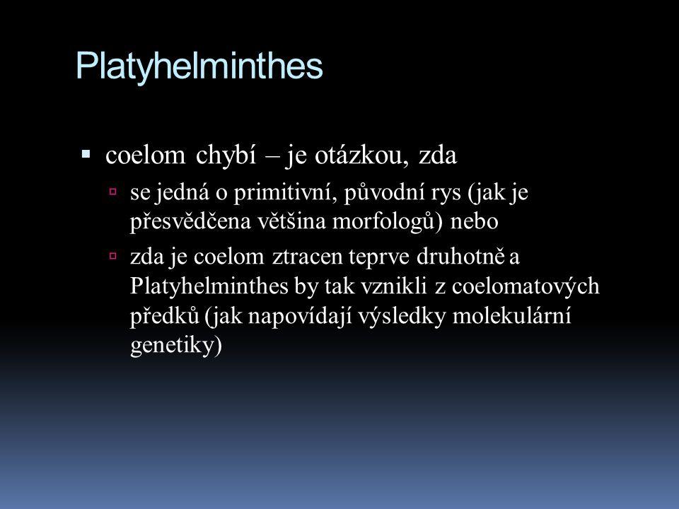 Platyhelminthes  coelom chybí – je otázkou, zda  se jedná o primitivní, původní rys (jak je přesvědčena většina morfologů) nebo  zda je coelom ztracen teprve druhotně a Platyhelminthes by tak vznikli z coelomatových předků (jak napovídají výsledky molekulární genetiky)