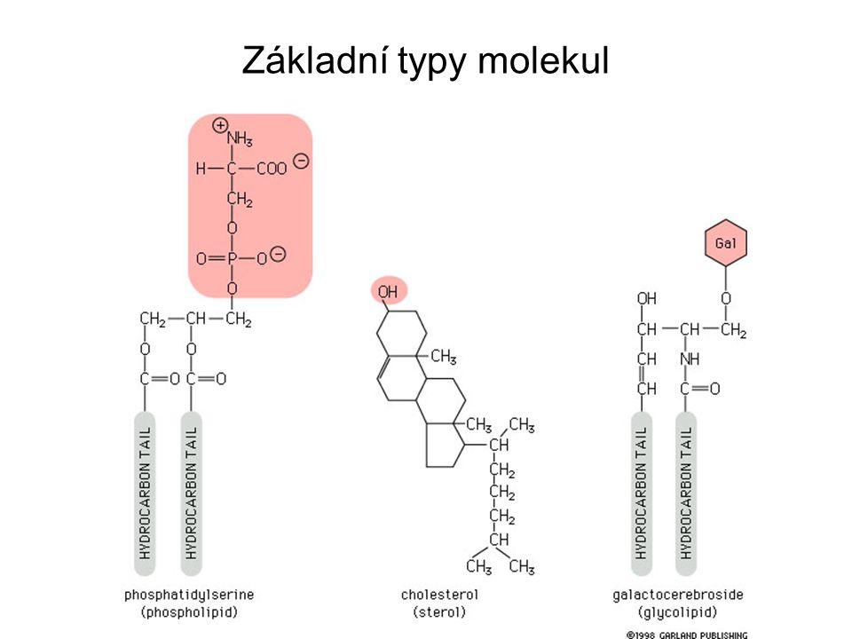 Základní typy molekul