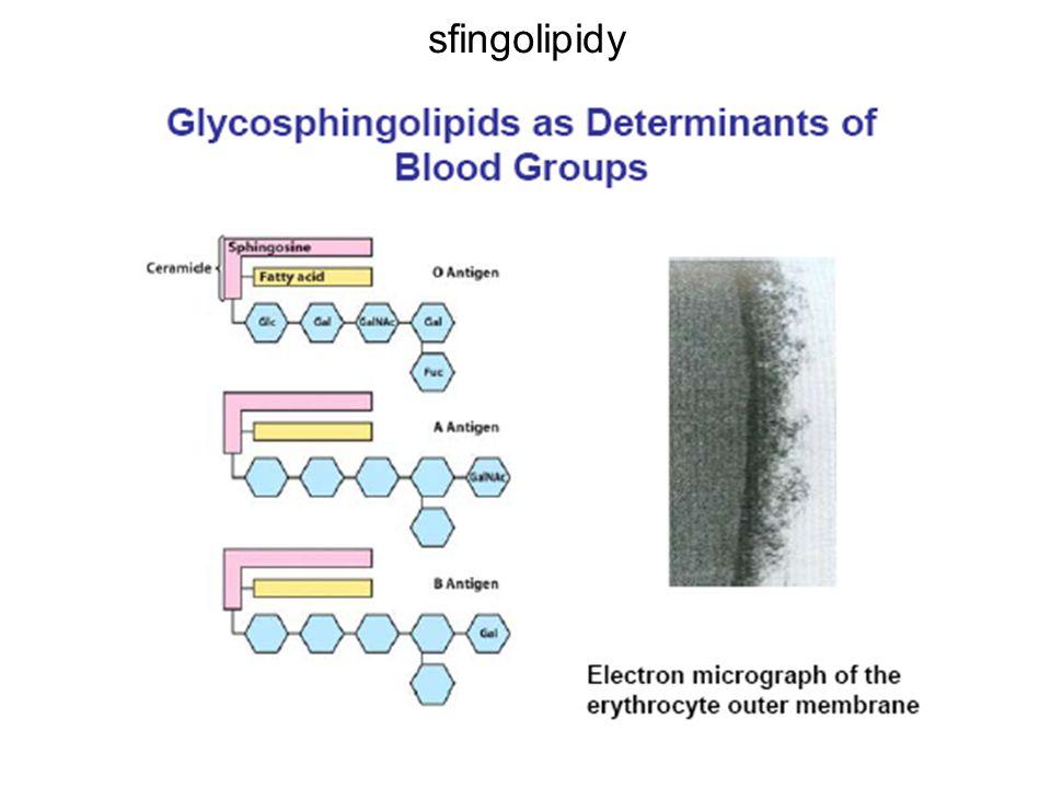 sfingolipidy