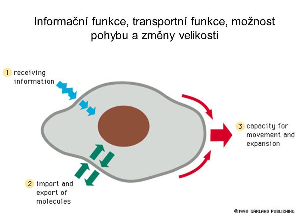 Informační funkce, transportní funkce, možnost pohybu a změny velikosti