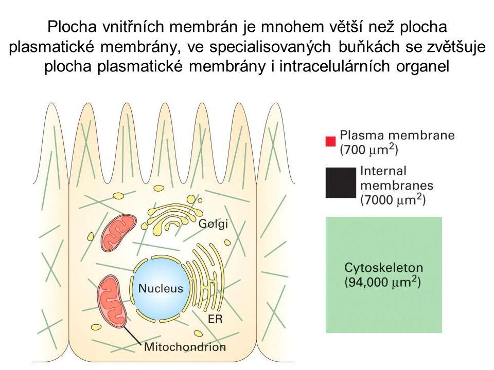 Plocha vnitřních membrán je mnohem větší než plocha plasmatické membrány, ve specialisovaných buňkách se zvětšuje plocha plasmatické membrány i intracelulárních organel