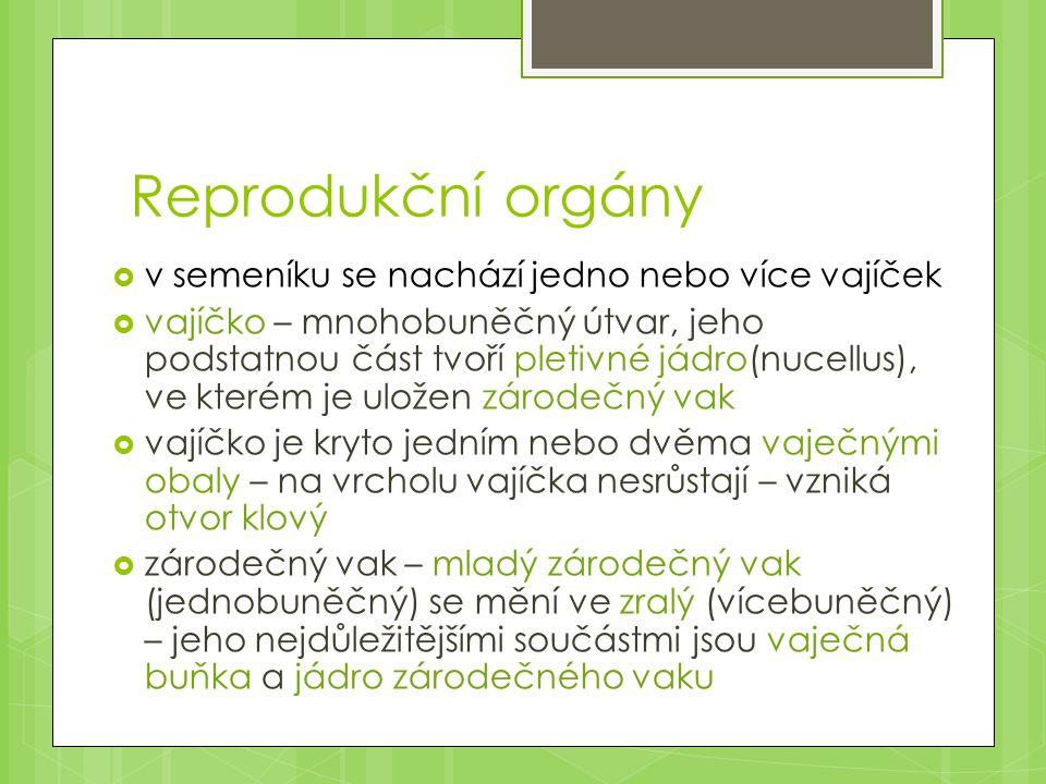 Reprodukční orgány  v semeníku se nachází jedno nebo více vajíček  vajíčko – mnohobuněčný útvar, jeho podstatnou část tvoří pletivné jádro(nucellus)