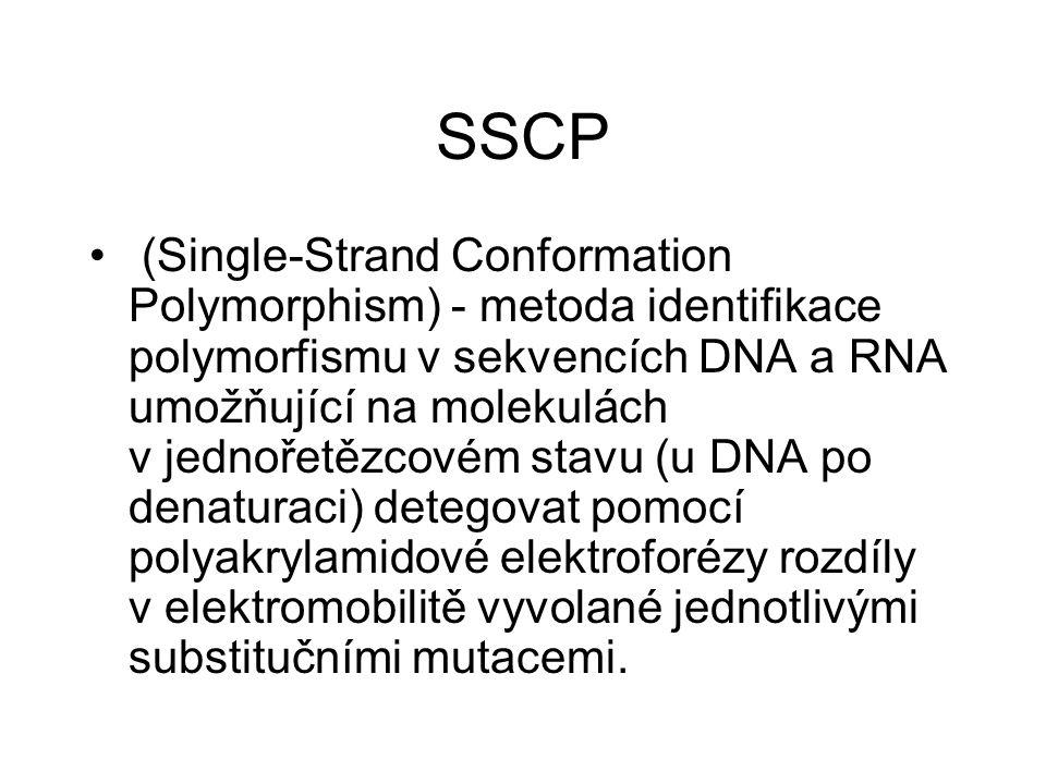 SSCP (Single-Strand Conformation Polymorphism) - metoda identifikace polymorfismu v sekvencích DNA a RNA umožňující na molekulách v jednořetězcovém st
