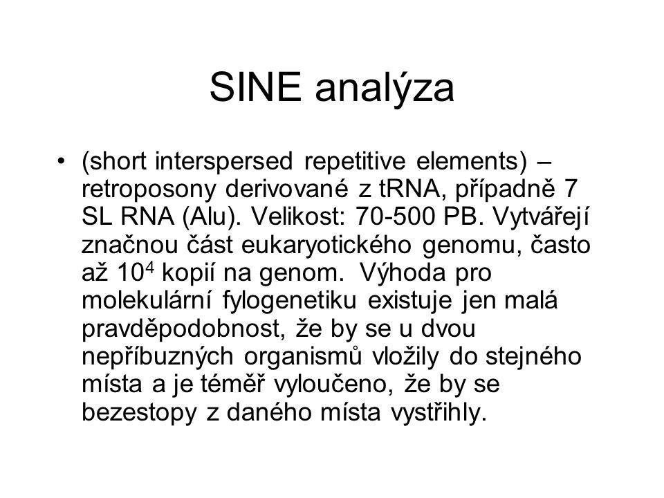 SINE analýza (short interspersed repetitive elements) – retroposony derivované z tRNA, případně 7 SL RNA (Alu). Velikost: 70-500 PB. Vytvářejí značnou