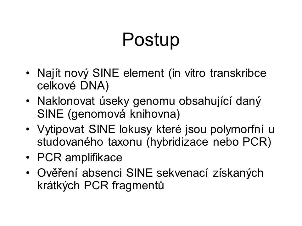 Postup Najít nový SINE element (in vitro transkribce celkové DNA) Naklonovat úseky genomu obsahující daný SINE (genomová knihovna) Vytipovat SINE loku