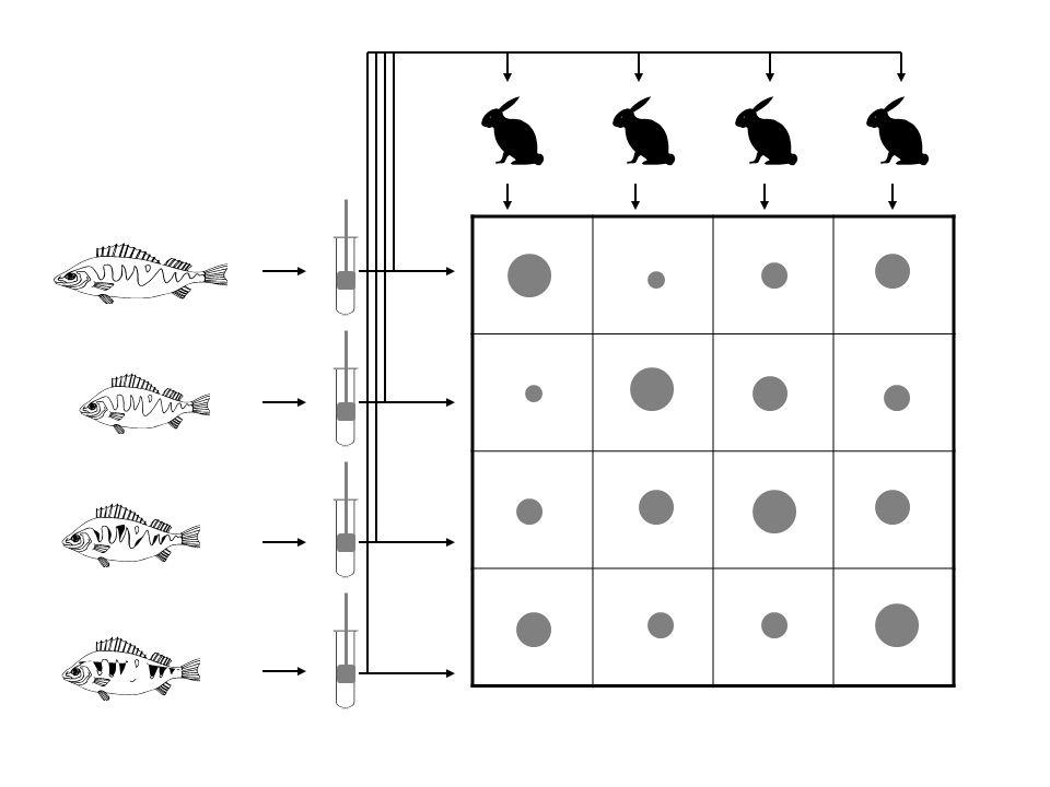 Stanovení imunologických distancí precipitace (turbidometrie či imunodifuse) komplement fixační reakce aglutinace ELISA Ria