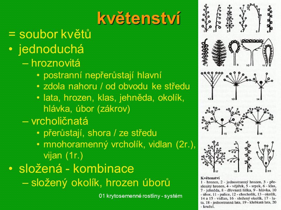 01 krytosemenné rostliny - systém17květenství = soubor květů jednoduchá –hroznovitá postranní nepřerůstají hlavní zdola nahoru / od obvodu ke středu lata, hrozen, klas, jehněda, okolík, hlávka, úbor (zákrov) –vrcholičnatá přerůstají, shora / ze středu mnohoramenný vrcholík, vidlan (2r.), vijan (1r.) složená - kombinace –složený okolík, hrozen úborů