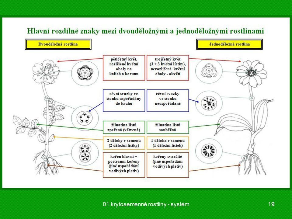 01 krytosemenné rostliny - systém19