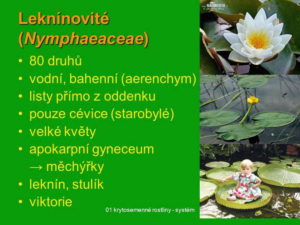 01 krytosemenné rostliny - systém21 Leknínovité (Nymphaeaceae) 80 druhů vodní, bahenní (aerenchym) listy přímo z oddenku pouze cévice (starobylé) velké květy apokarpní gyneceum → měchýřky leknín, stulík viktorie