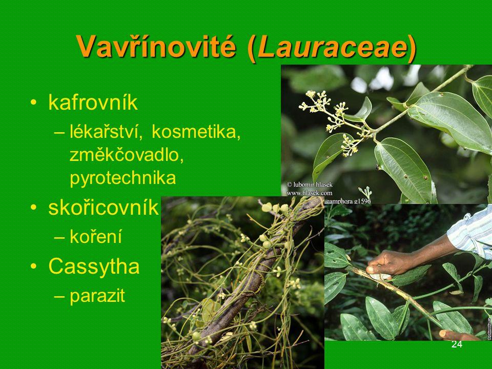 01 krytosemenné rostliny - systém24 Vavřínovité (Lauraceae) kafrovník –lékařství, kosmetika, změkčovadlo, pyrotechnika skořicovník –koření Cassytha –parazit