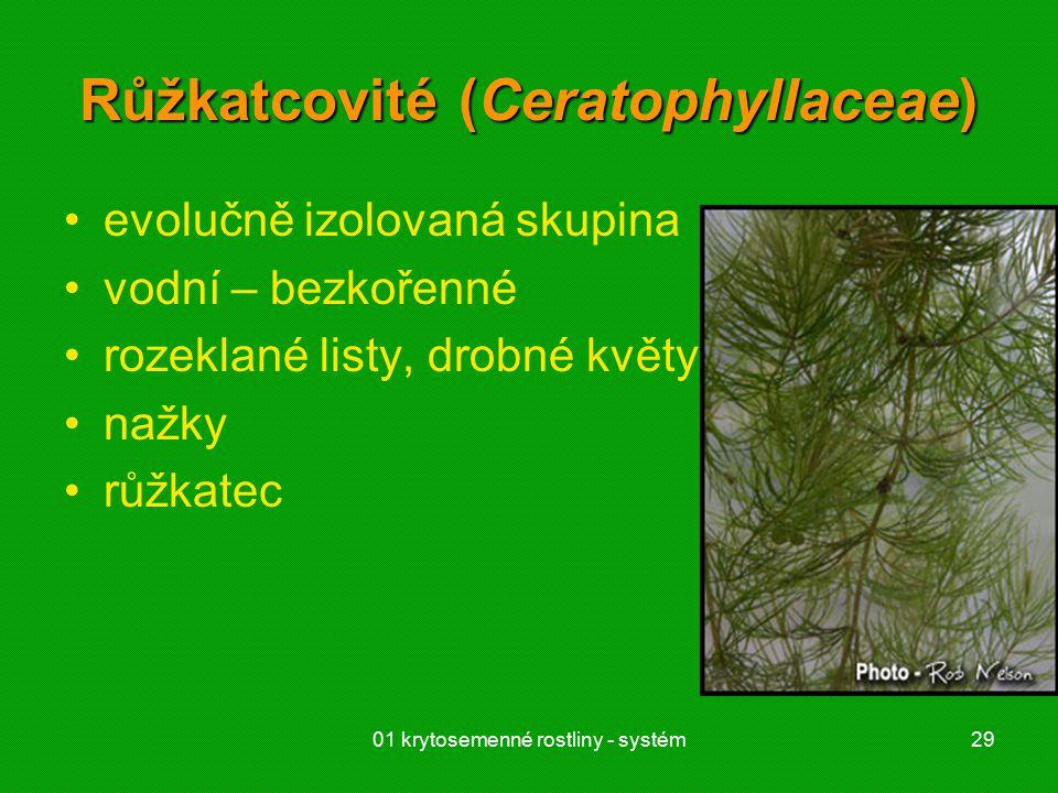 01 krytosemenné rostliny - systém29 Růžkatcovité (Ceratophyllaceae) evolučně izolovaná skupina vodní – bezkořenné rozeklané listy, drobné květy nažky růžkatec