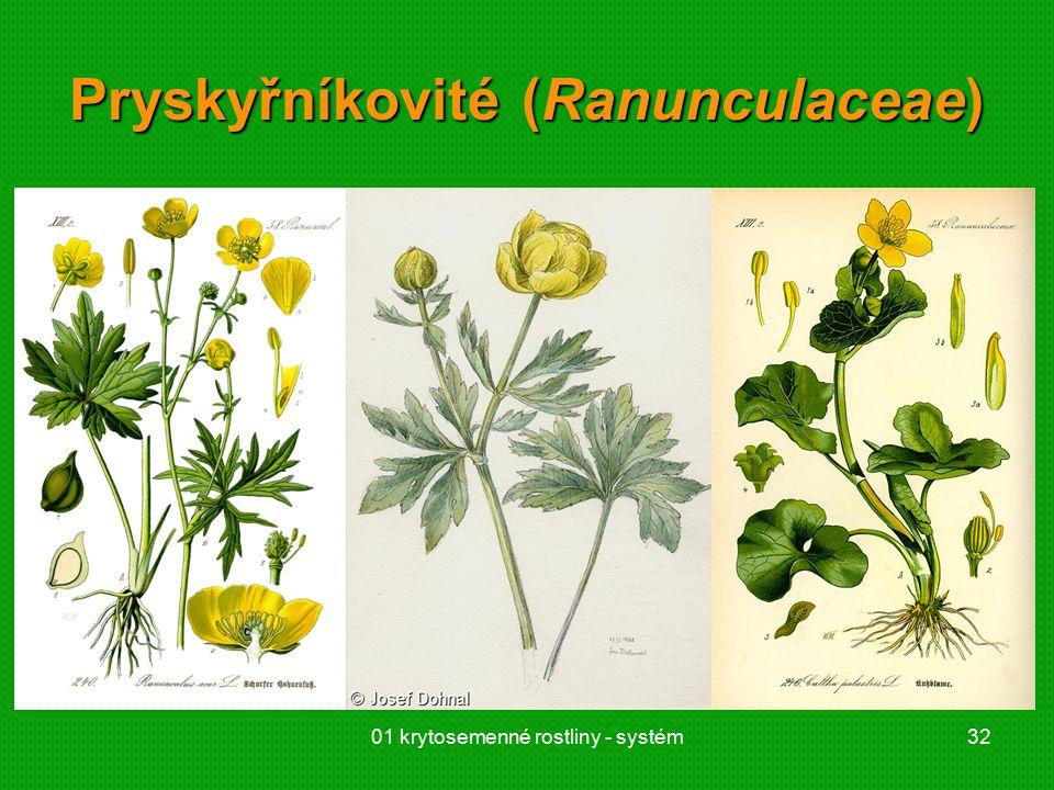 01 krytosemenné rostliny - systém32 Pryskyřníkovité (Ranunculaceae)