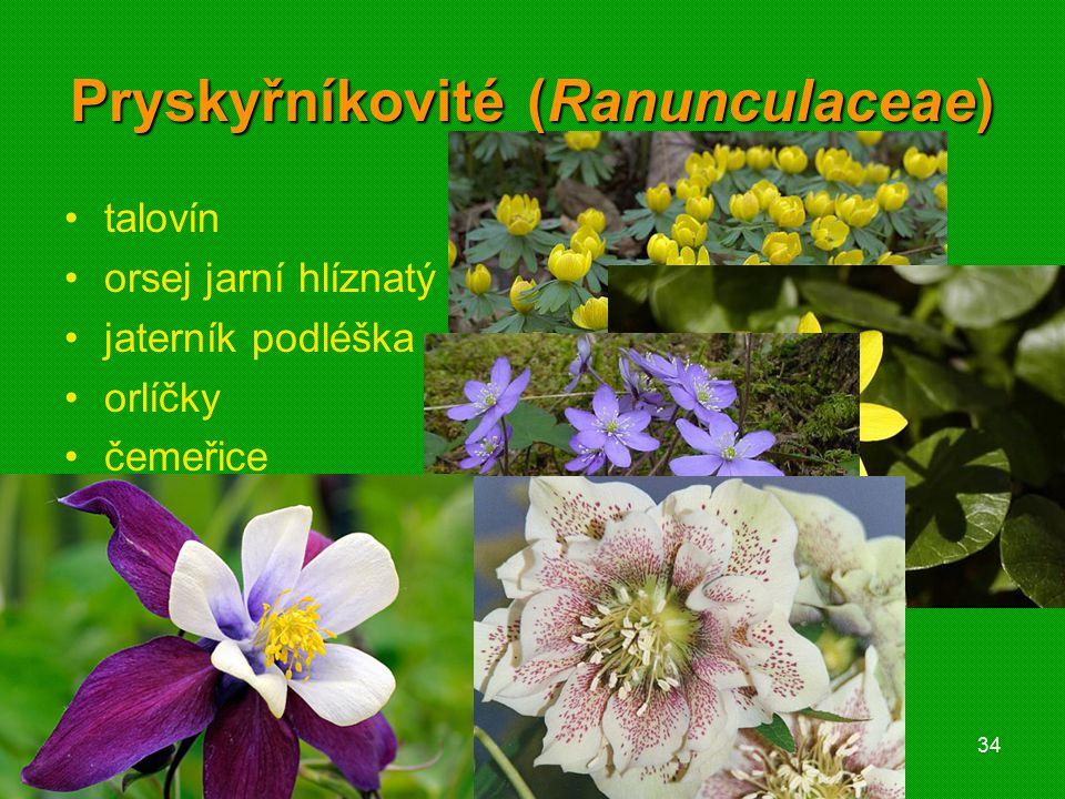 01 krytosemenné rostliny - systém34 Pryskyřníkovité (Ranunculaceae) talovín orsej jarní hlíznatý jaterník podléška orlíčky čemeřice