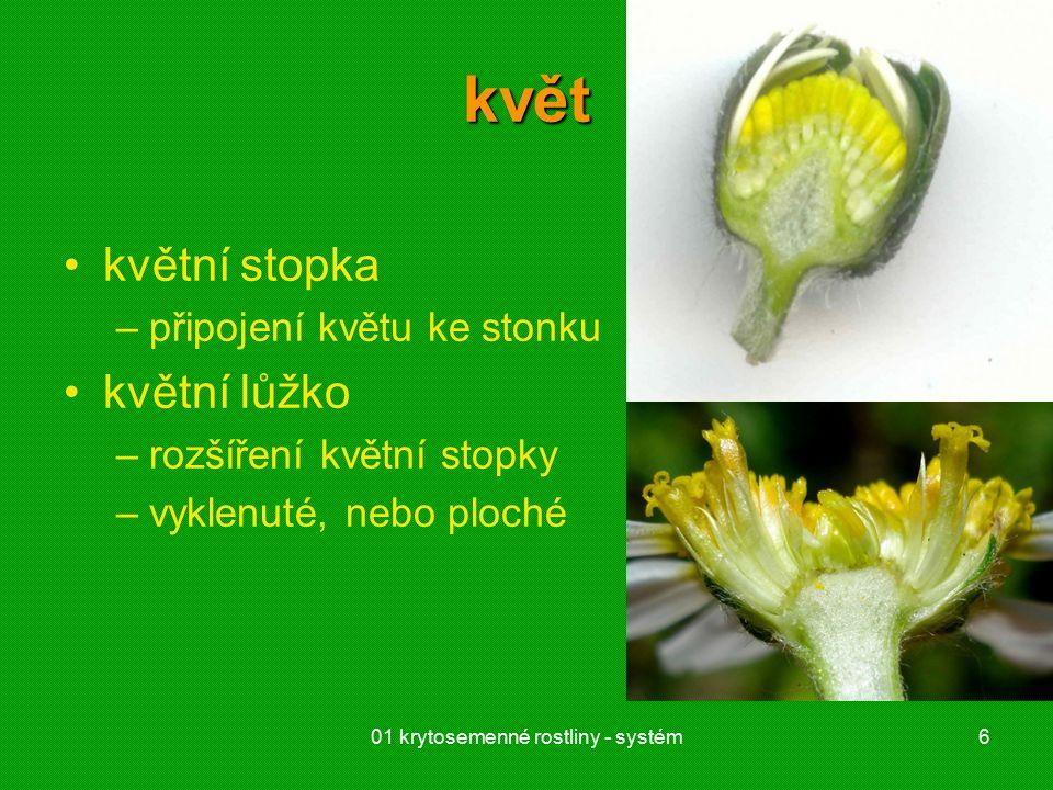 01 krytosemenné rostliny - systém6 květ květní stopka –připojení květu ke stonku květní lůžko –rozšíření květní stopky –vyklenuté, nebo ploché