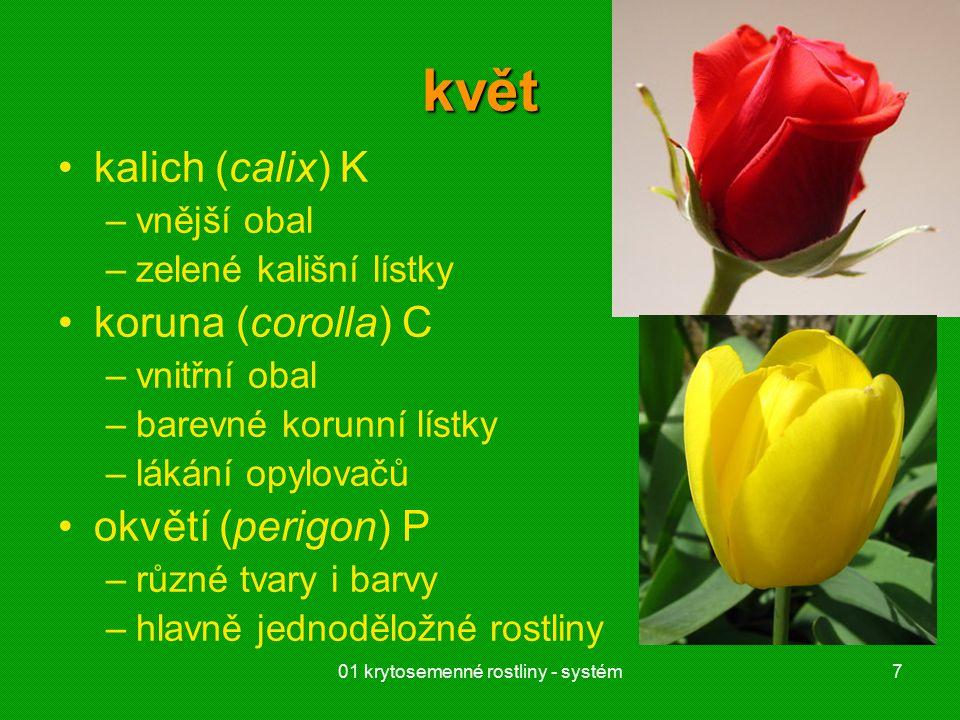 01 krytosemenné rostliny - systém7 květ kalich (calix) K –vnější obal –zelené kališní lístky koruna (corolla) C –vnitřní obal –barevné korunní lístky –lákání opylovačů okvětí (perigon) P –různé tvary i barvy –hlavně jednoděložné rostliny