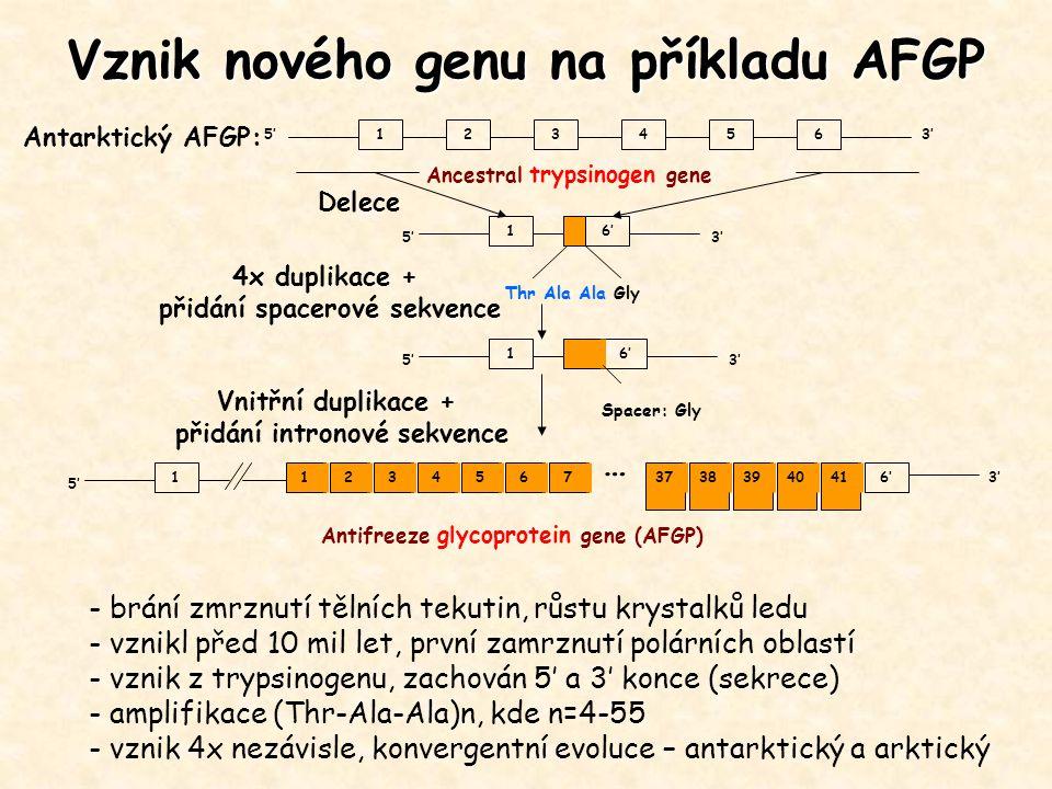 Vznik nového genu na příkladu AFGP 123456 5'3' Ancestral trypsinogen gene 16' 5'3' Thr Ala Ala Gly 16' 5'3' Delece 4x duplikace + přidání spacerové se