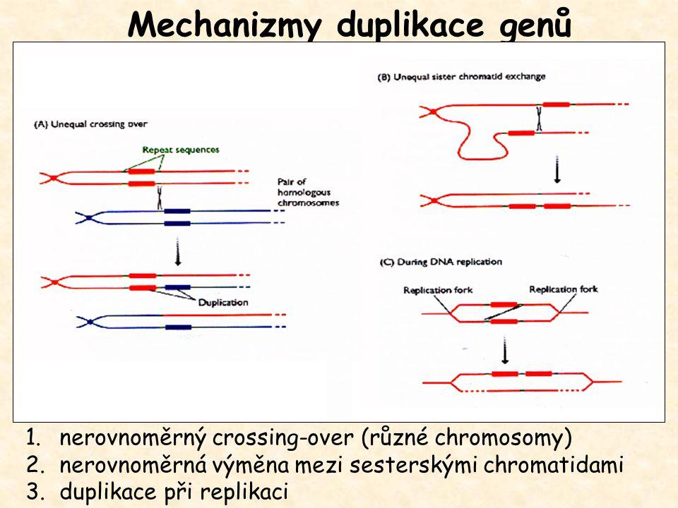 Mechanizmy duplikace genů 1.nerovnoměrný crossing-over (různé chromosomy) 2.nerovnoměrná výměna mezi sesterskými chromatidami 3.duplikace při replikac