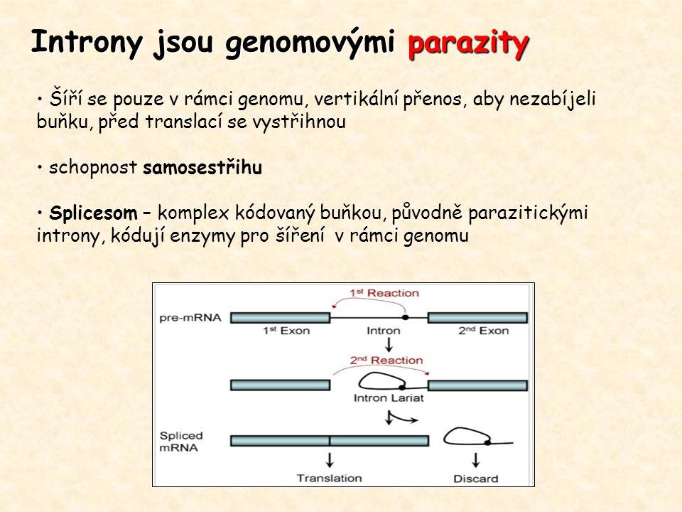 Introny jsou genomovými parazity Šíří se pouze v rámci genomu, vertikální přenos, aby nezabíjeli buňku, před translací se vystřihnou schopnost samoses