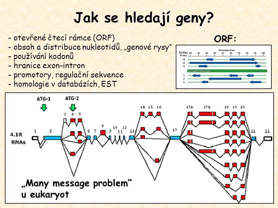 Hledání genů u prokaryot ORF (otevřené čtecí rámce) –start kodon je následován nejméně 60 AK, poté stop kodon –homologie se známými ORF Signální sekvence –Transkripce - konsensus promotorové a terminační sekvence –Translace - vazebné místo na ribozóm: Shine-Dalgarnova sekvence Rozdíly v obsahu bazí mezi kódující a nekódující sekvencemi DNA - obsah GC, tzv.
