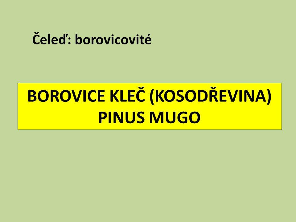 BOROVICE KLEČ (KOSODŘEVINA) PINUS MUGO Čeleď: borovicovité