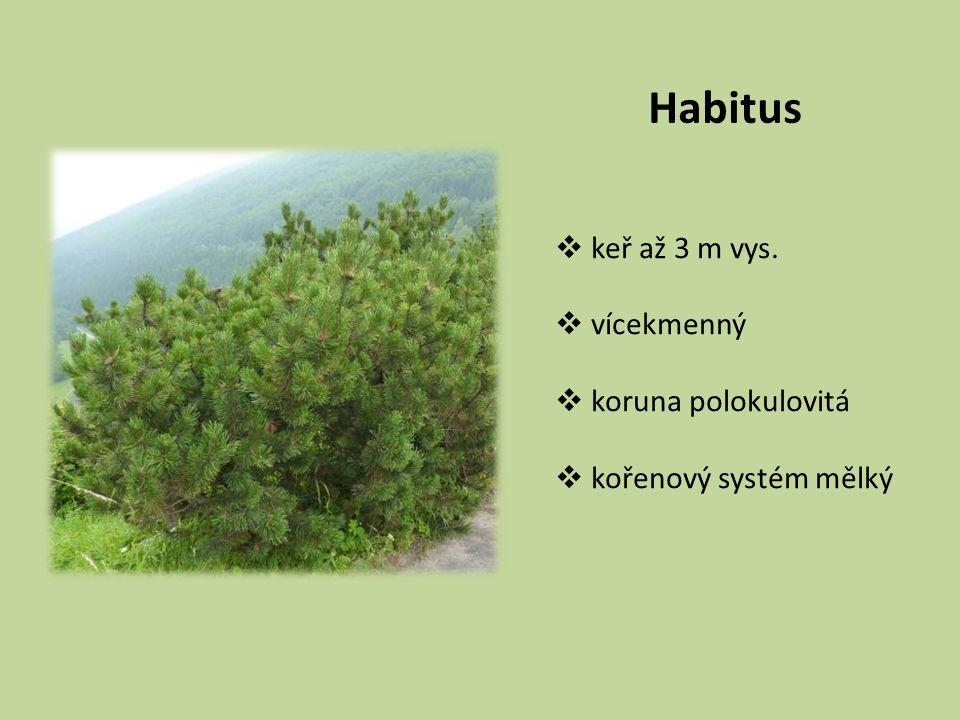 Habitus  keř až 3 m vys.  vícekmenný  koruna polokulovitá  kořenový systém mělký