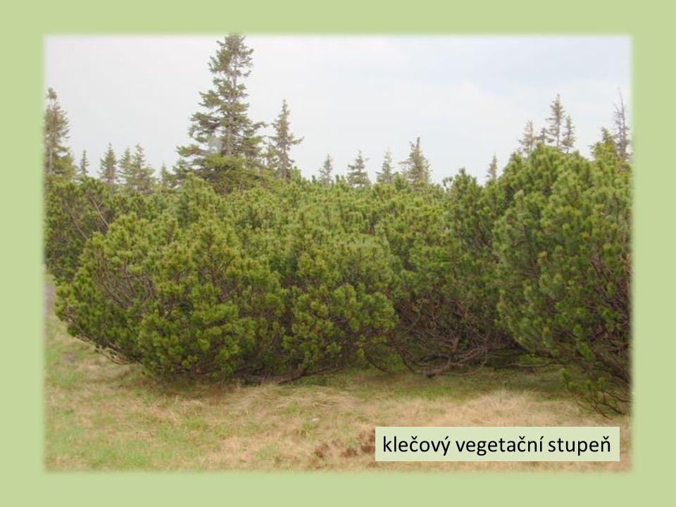 klečový vegetační stupeň