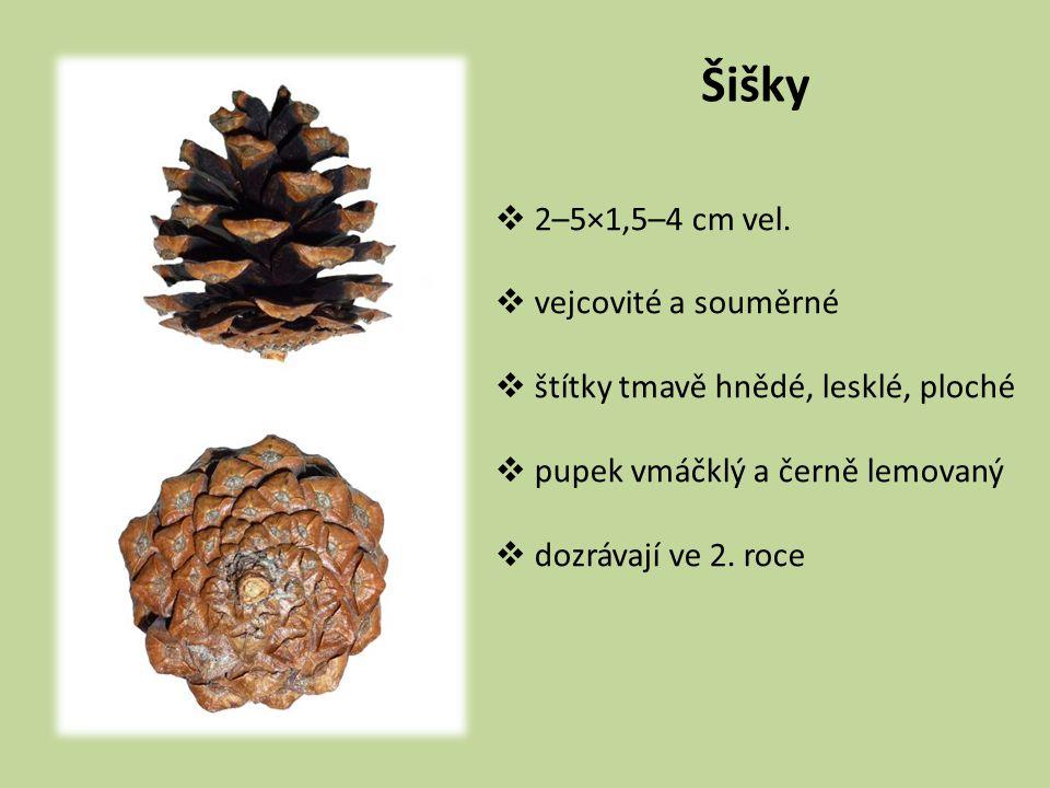 Šišky  2–5×1,5–4 cm vel.  vejcovité a souměrné  štítky tmavě hnědé, lesklé, ploché  pupek vmáčklý a černě lemovaný  dozrávají ve 2. roce