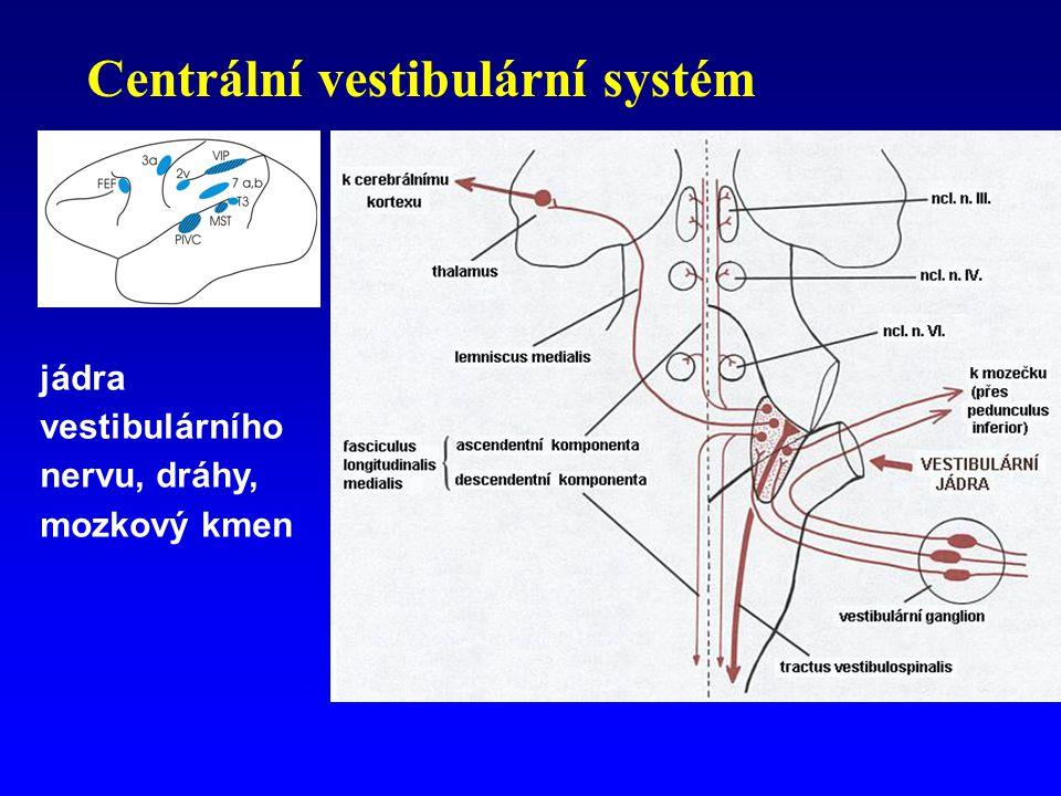 Centrální vestibulární systém jádra vestibulárního nervu, dráhy, mozkový kmen