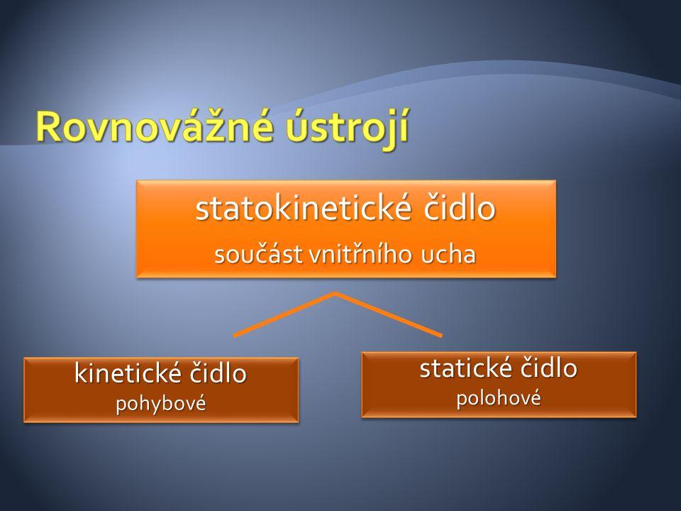 statokinetické čidlo součást vnitřního ucha statokinetické čidlo součást vnitřního ucha kinetické čidlo pohybové pohybové statické čidlo polohové polo