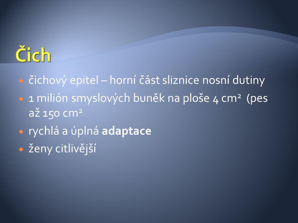  čichový epitel – horní část sliznice nosní dutiny  1 milión smyslových buněk na ploše 4 cm 2 (pes až 150 cm 2  rychlá a úplná adaptace  ženy citl