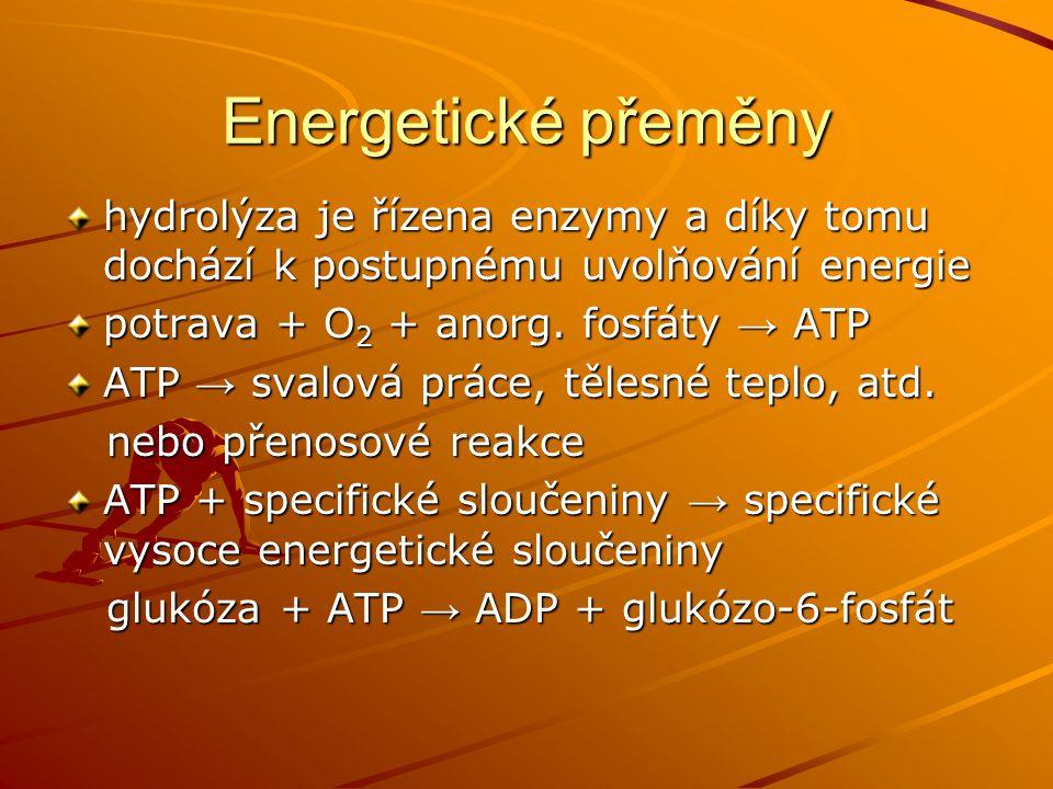 Energetické přeměny hydrolýza je řízena enzymy a díky tomu dochází k postupnému uvolňování energie potrava + O 2 + anorg. fosfáty → ATP ATP → svalová