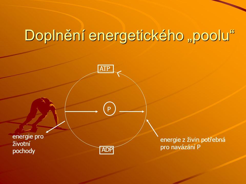 """Doplnění energetického """"poolu"""" ATP ADP P energie z živin potřebná pro navázání P energie pro životní pochody"""