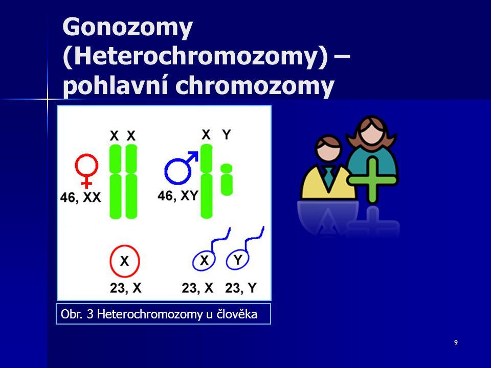 9 Gonozomy (Heterochromozomy) – pohlavní chromozomy Obr. 3 Heterochromozomy u člověka