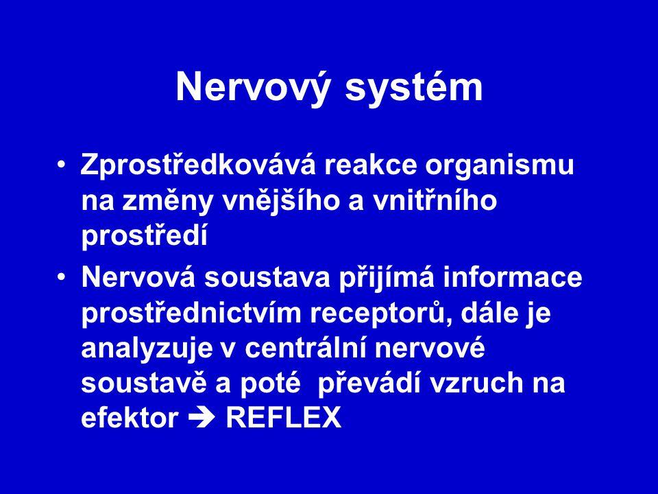 Nervový systém Zprostředkovává reakce organismu na změny vnějšího a vnitřního prostředí Nervová soustava přijímá informace prostřednictvím receptorů, dále je analyzuje v centrální nervové soustavě a poté převádí vzruch na efektor  REFLEX