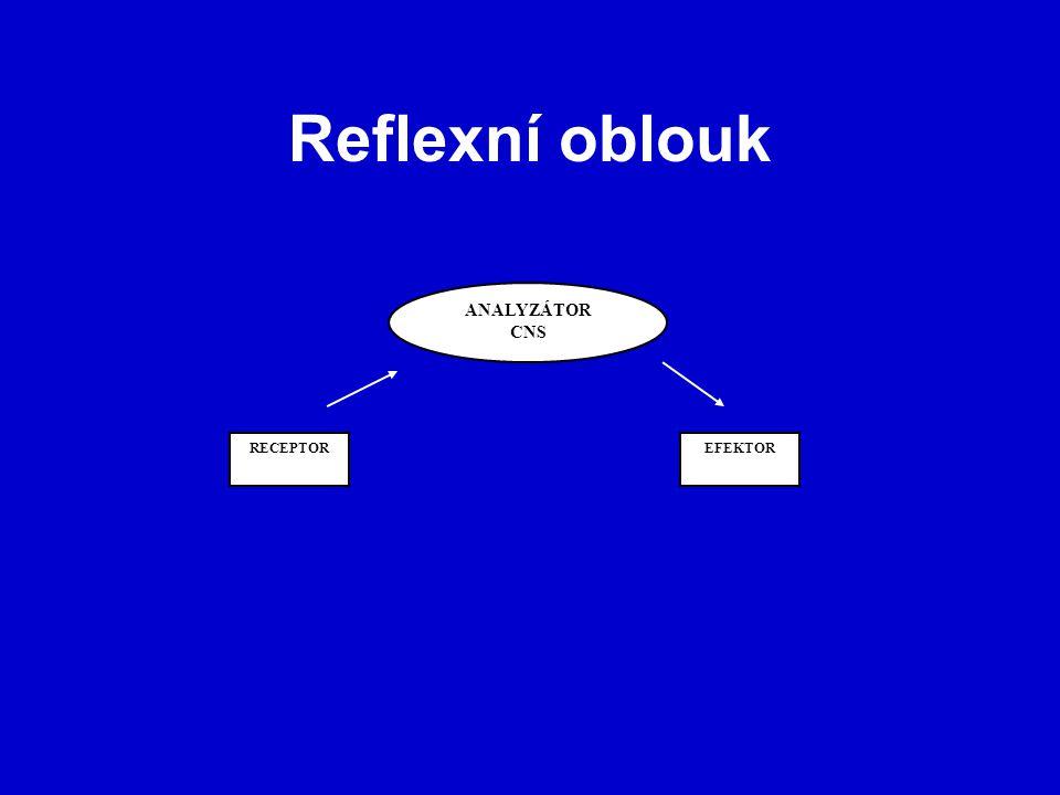 Reflexní oblouk ANALYZÁTOR CNS RECEPTOREFEKTOR