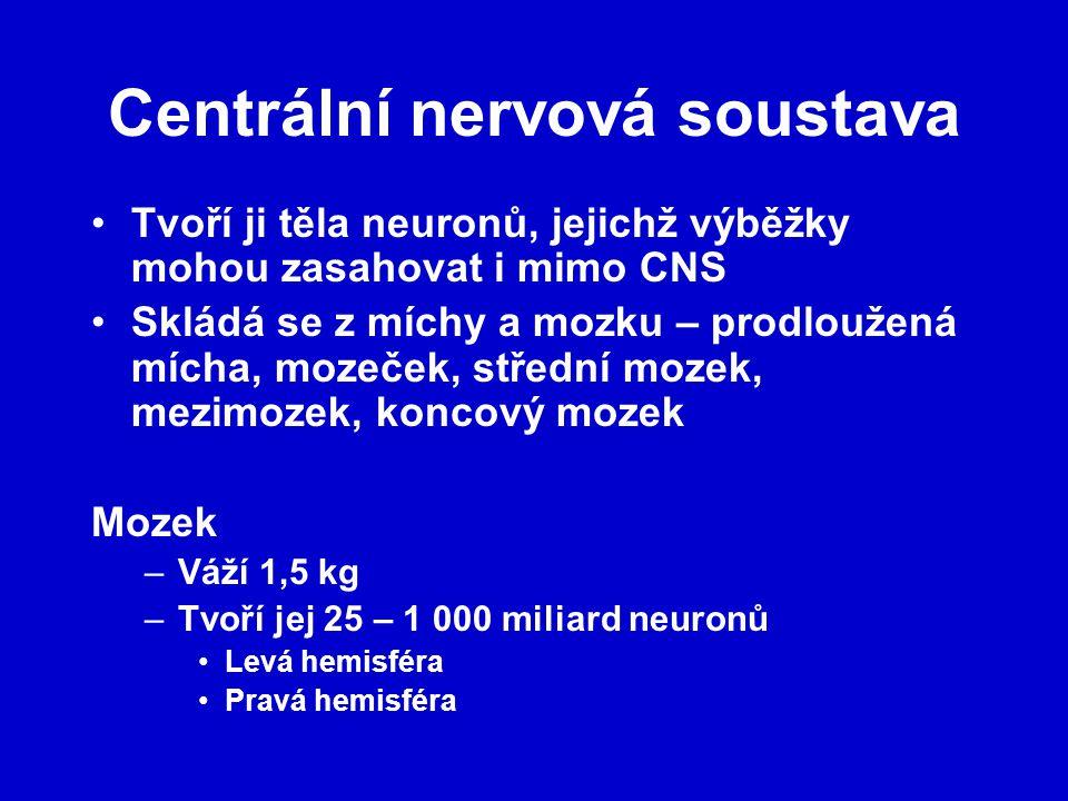 Centrální nervová soustava Tvoří ji těla neuronů, jejichž výběžky mohou zasahovat i mimo CNS Skládá se z míchy a mozku – prodloužená mícha, mozeček, střední mozek, mezimozek, koncový mozek Mozek –Váží 1,5 kg –Tvoří jej 25 – 1 000 miliard neuronů Levá hemisféra Pravá hemisféra