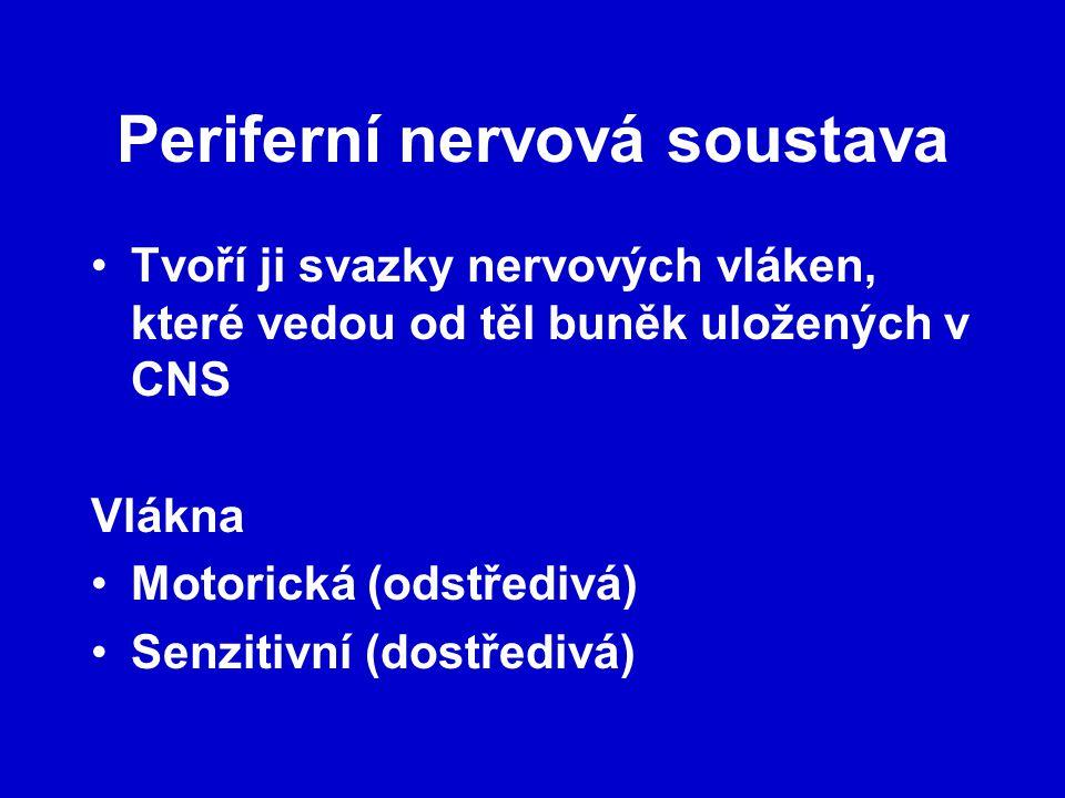 Periferní nervová soustava Tvoří ji svazky nervových vláken, které vedou od těl buněk uložených v CNS Vlákna Motorická (odstředivá) Senzitivní (dostředivá)