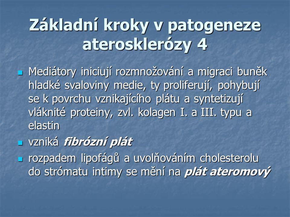 Základní kroky v patogeneze aterosklerózy 4 Mediátory iniciují rozmnožování a migraci buněk hladké svaloviny medie, ty proliferují, pohybují se k povr