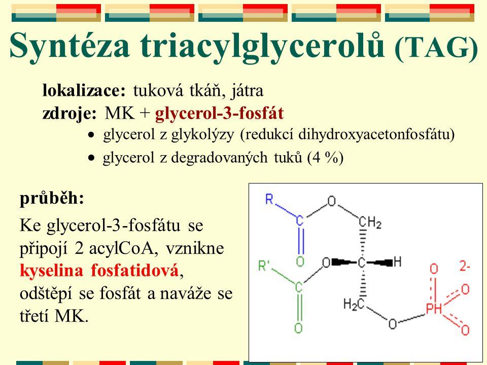 Syntéza triacylglycerolů (TAG) lokalizace: tuková tkáň, játra zdroje: MK + glycerol-3-fosfát  glycerol z glykolýzy (redukcí dihydroxyacetonfosfátu) 