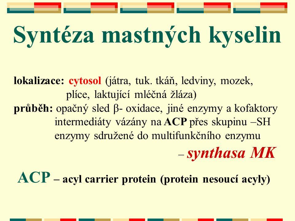 lokalizace: cytosol (játra, tuk. tkáň, ledviny, mozek, plíce, laktující mléčná žláza) průběh: opačný sled β- oxidace, jiné enzymy a kofaktory intermed
