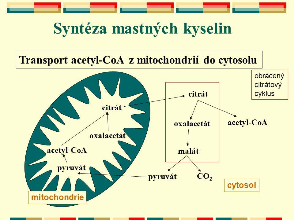 Transport acetyl-CoA z mitochondrií do cytosolu acetyl-CoA oxalacetát citrát acetyl-CoA citrát pyruvát oxalacetát malát mitochondrie cytosol CO 2 obrá