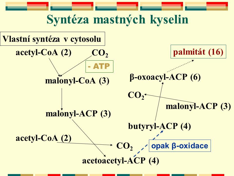 Syntéza mastných kyselin Vlastní syntéza v cytosolu acetyl-CoA (2) malonyl-CoA (3) CO 2 butyryl-ACP (4) acetoacetyl-ACP (4) acetyl-CoA (2) CO 2 malony