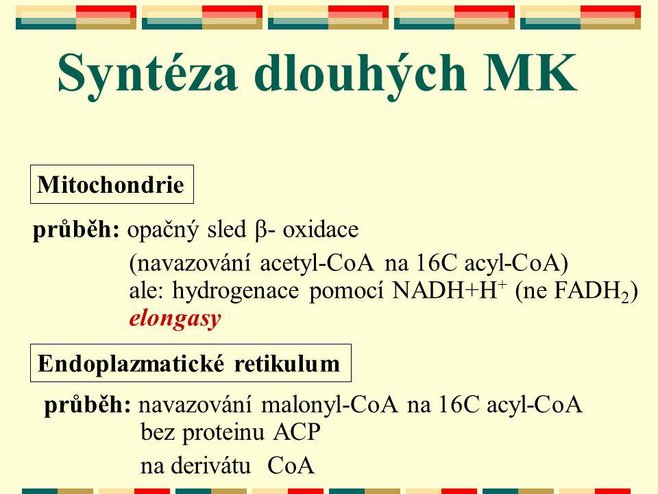 Syntéza dlouhých MK průběh: opačný sled β- oxidace (navazování acetyl-CoA na 16C acyl-CoA) ale: hydrogenace pomocí NADH+H + (ne FADH 2 ) elongasy Mito