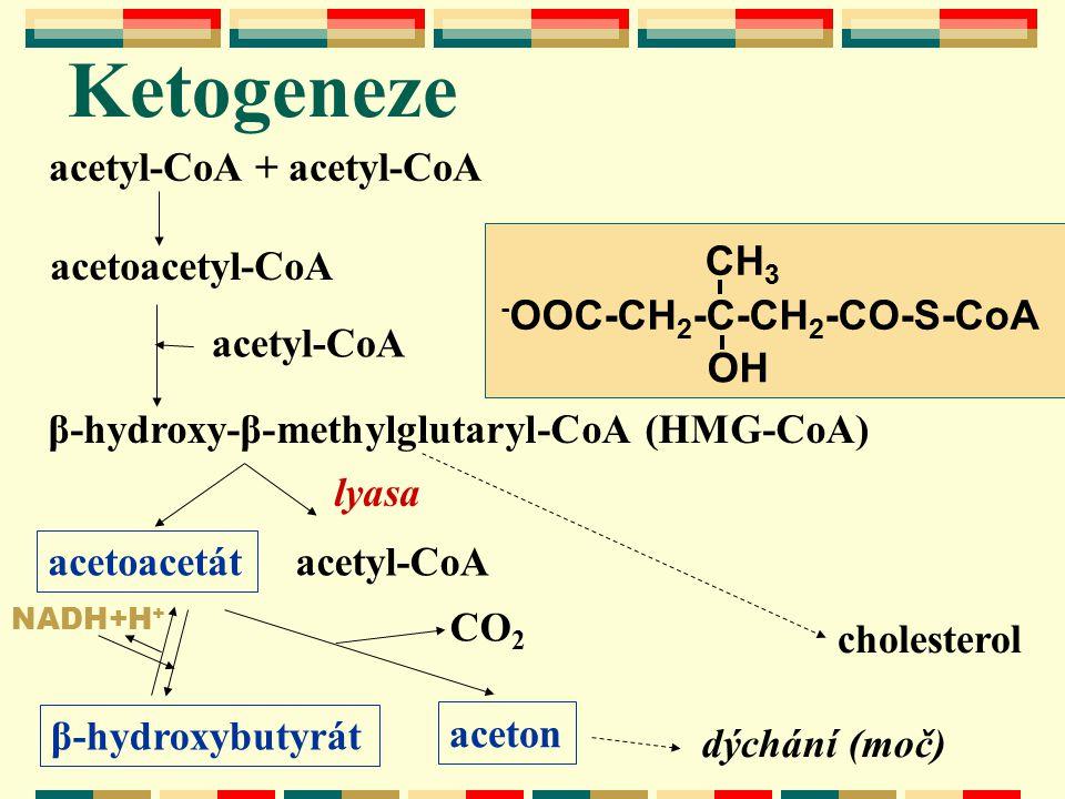 Ketogeneze lyasa aceton acetyl-CoA + acetyl-CoA acetoacetyl-CoA acetyl-CoA β-hydroxy-β-methylglutaryl-CoA (HMG-CoA) cholesterol acetyl-CoA acetoacetát